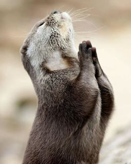 praying squirrel